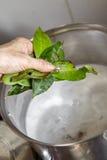 Adding bay leaf Stock Image