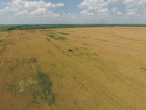 Adding herbicide tractor on the field of ripe wheat. View from above. Royalty Free Stock Photos