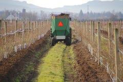 Adding Soil to Berry Crop Royalty Free Stock Photos