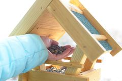 Adding sunflower seeds to the bird feeder royalty free stock photos