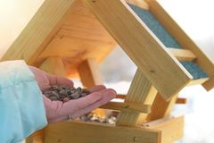 Adding sunflower seeds to the bird feeder stock images