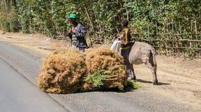 Addis Ababa, Äthiopien am 30. Januar 2014 Kichererbsenlandwirt transpo Lizenzfreies Stockfoto