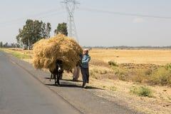 Addis Ababa, Ethiopie, le 30 janvier 2014, transpo d'agriculteur de pois chiche Images stock