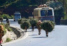 ADDIS ABABA, ETIOPÍA - 25 DE NOVIEMBRE DE 2008: Camino rodeado por el tr Fotos de archivo libres de regalías