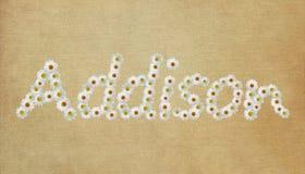 Addison Flower Name Imágenes de archivo libres de regalías