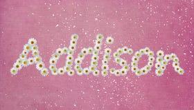 Addison Flower Name Immagini Stock Libere da Diritti