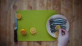 Addition to fish small pieces of lemon. Top view of the process of making a small silver fish, male hands cover capelin with fresh lemon slices, lying in a stock footage