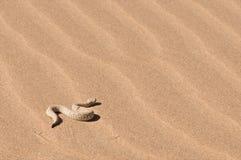 Addizionatrice della sabbia del Peringuey Fotografia Stock Libera da Diritti