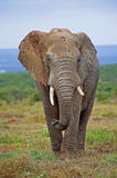 Addo Afternoon Stock Photo