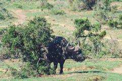 Addo elephant national park,eastern cape,South africa Stock Photos