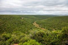 Addo Elephant Park Eastern Cape Südafrika Stockfotografie