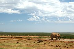 Addo Elephant Waterhole Royalty Free Stock Photography