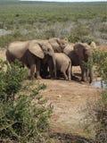 Addo Elephantpark, Sudafrica fotografia stock