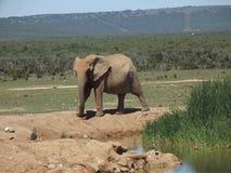 Addo Elephantpark, Zuid-Afrika Royalty-vrije Stock Afbeeldingen