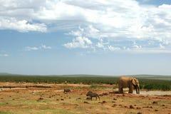 addo słonia waterhole Fotografia Royalty Free