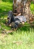 Addormentato sotto un albero di gomma fotografie stock