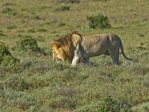 Addos Kalahari Lizenzfreie Stockfotografie