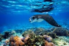 addu环礁印第安马尔代夫女用披巾海洋光芒 免版税库存图片