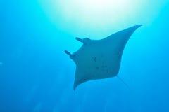 addu ωκεάνια ακτίνα manta των Μαλβίδων ατολλών ινδική Στοκ εικόνες με δικαίωμα ελεύθερης χρήσης