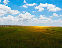Addy field with beautiful blue sky Royalty Free Stock Photos