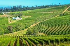 Adega Cape Town da exploração agrícola fotos de stock royalty free