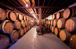Adega de vinho velha com os tambores nas pilhas Fotos de Stock Royalty Free