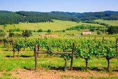 Adega e vinhedo de Oregon Fotografia de Stock