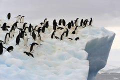 adeile góra lodowa Fotografia Royalty Free