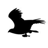 Adelaar, het silhouet van de Visarend Stock Foto