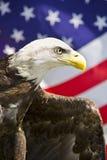 Adelaar met Vlag Stock Afbeelding