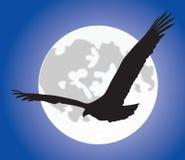 Adelaar silhouete over maan Stock Afbeelding