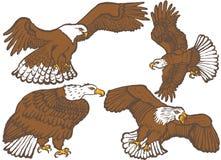 adelaars stock illustratie