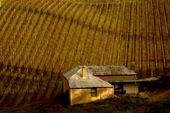 Adelaide hills vineyard. In Autumn royalty free stock photo