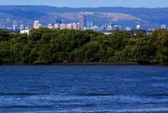 Adelaide, mangrovie & colline Fotografie Stock