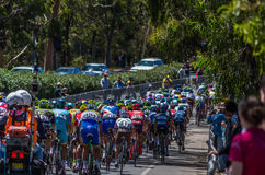 Adelaide Tour Down Under 13 Lizenzfreies Stockbild