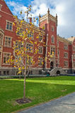 Adelaide-Universität Lizenzfreies Stockbild