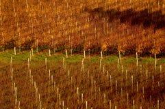 Adelaide wzgórzy winnica Fotografia Royalty Free