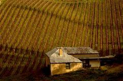 Adelaide wzgórzy winnica Zdjęcie Royalty Free
