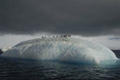 Adeli no iceberg fotografia de stock royalty free