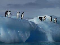 Adelie企鹅在南极洲 免版税库存照片
