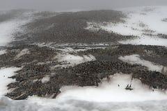 Adelie企鹅群, Gourdin海岛,南极声音, Anarctica 免版税图库摄影