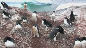 Adelie penguin colony on an island near the Antarctic Peninsula stock video footage