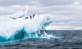 Adelie penguins on a beautiful iceberg in Antarctica. An Antarctica nature scene, with a group of five Adelie penguins on a floating iceberg in the icy cold royalty free stock photos