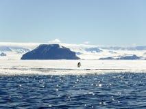 Adelie penguins in Gustaf Sound, Antarctica Stock Photo