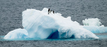 Adelie Penguins on Ice. A small group of Adelie Penguins on top of an iceberg - Antarctic stock images
