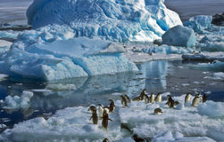 Adelie Penguins on Ice, Antarctica. Adelie penguins on ice, near Paulet Island in Antarctica, surrounded by a vast landscape of water, ice and snow