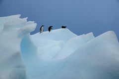 Adelie Penguins and Southern Giant Petrel, Paradise Island, Antarctica Royalty Free Stock Image