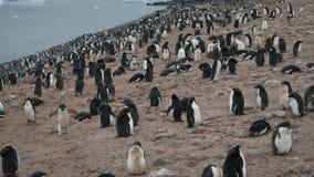 Adelie-Pinguin in Antarktik Stockfotografie