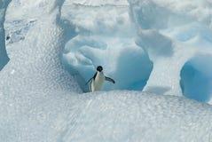 Adelie-Pinguin auf Eisberg Lizenzfreies Stockfoto