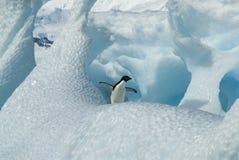 Adelie-Pinguin auf Eisberg Lizenzfreie Stockfotografie
